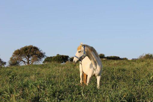 retraite_yoga_portugal_mai_2018_cheval