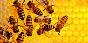 burts bees retraitesdeyoga.com
