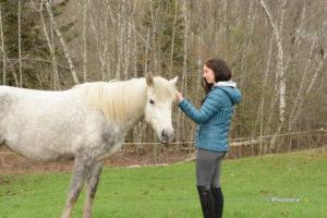 retraite_yoga_chevaux_novembre_2018_cheval