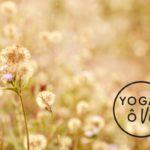 retraite yoga meditation Quebec 10 juin 2017
