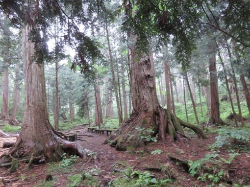 retraite_yoga_arbre