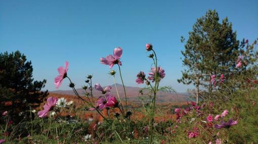 retraite_yoga_harvest_retreat_fleurs