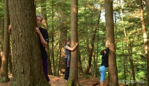 retraite_yoga_fluidite_juillet_2018_arbres