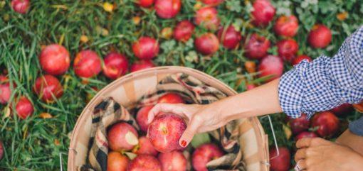 retraite_yoga_kundalini_septembre_2018_pommes