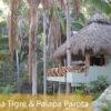retraite_yoga_deconnecter_reconnecter_fevrier_2019_mexique_palapas