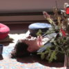 retraite_yoga_fevrier_salamandre_meditation