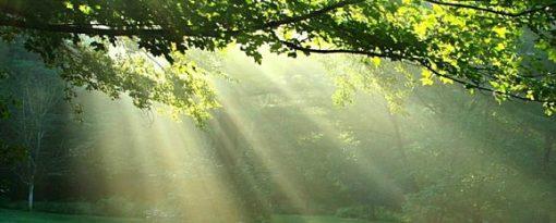 retraite_sainte-lucie_des_laurentides_août_2019_soleil_forêt