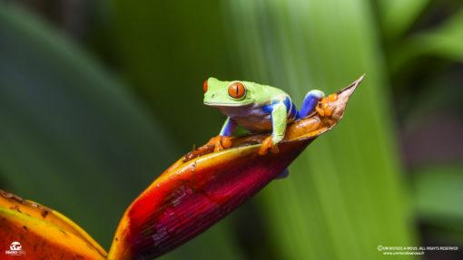 retraite_yoga_costa_rica_fevrier_2020_grenouille