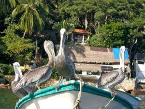 retraite_yoga_yelapa_mexique_decembre_2019_oiseaux