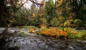 retraite_yoga_lac_brome_novembre_2019_riviere-automne