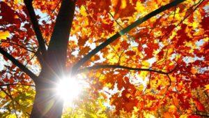 retraite_yoga_lac_brome_octobre_2019_automne_feuille_arbre
