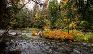 retraite_yoga_lac_brome_octobre_2019_riviere-automne