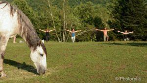 retraite_yoga_racine_2019-2020_cheval_1