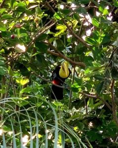 retraite_yoga_costa_rica_avril_2020_oiseau