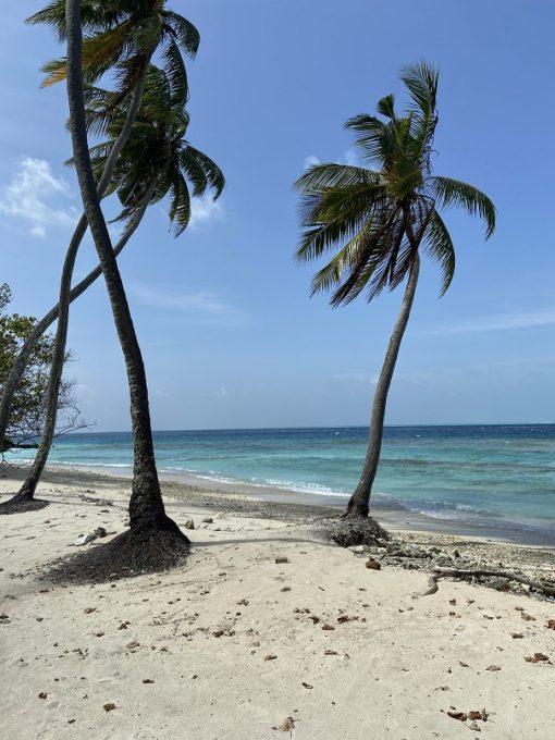 retraite_yoga_maldives_avril_2020_palmiers