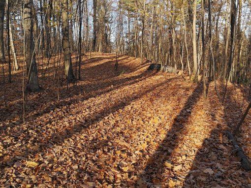 retraite_yoga_quebec_automne_nature