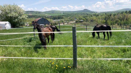 retraite_yoga_camping_chevaux